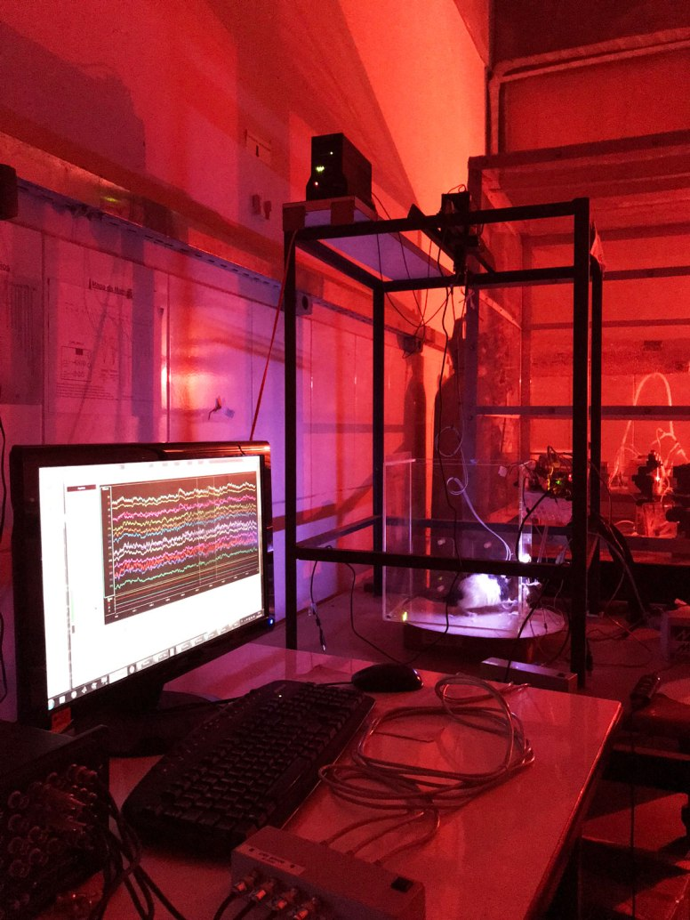 Photo of a lab with red lighting, showing a computer analyzing brain waves connected to a rat.