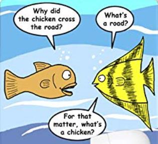 Why Chicken